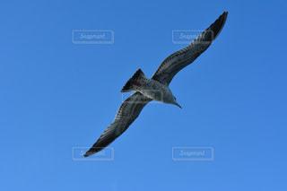 空を飛んでいる鳥 - No.1022226