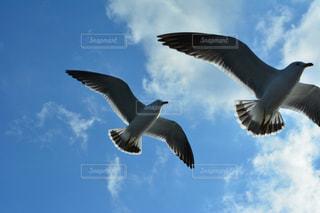 曇りの日に空を飛んでいる鳥の写真・画像素材[1022227]