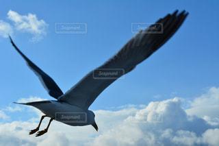 空を飛んでいる鳥の写真・画像素材[1022228]