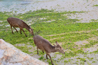 晴れた日に草を食べる鹿 - No.1022530