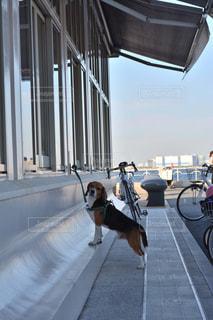 歩道の上を歩く犬の写真・画像素材[1022556]