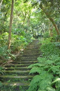 森の中の緑の植物の写真・画像素材[1022559]
