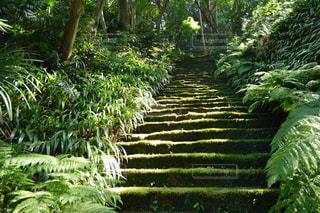 庭園の緑の植物の写真・画像素材[1022563]