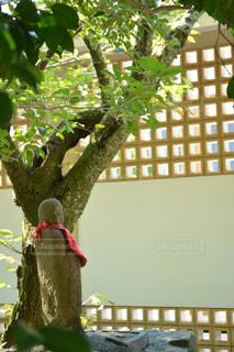 近くの木のアップの写真・画像素材[1022565]