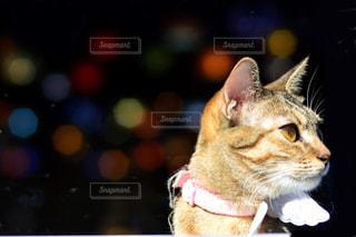 テーブルの上に座って猫の写真・画像素材[1072534]