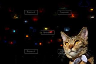 カメラを見ている猫の写真・画像素材[1072535]