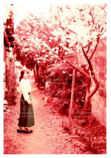 桜 - No.1091268
