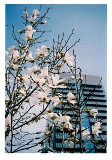 枝の上に座って鳥の群れの写真・画像素材[1105115]