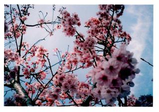 木の枝に花の花瓶の写真・画像素材[1105121]