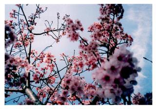 木の枝に花の花瓶の写真・画像素材[1105126]