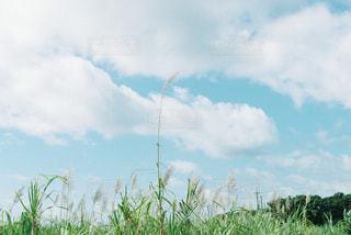 近くに緑のフィールドのの写真・画像素材[1105337]