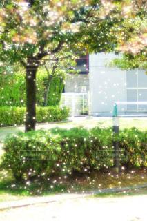 木の前にあるベンチの写真・画像素材[1111087]