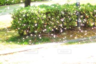 近くの木のアップの写真・画像素材[1111088]