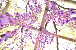 紫色の花と木の写真・画像素材[1153751]