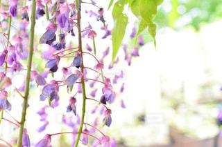 近くの花のアップの写真・画像素材[1153753]