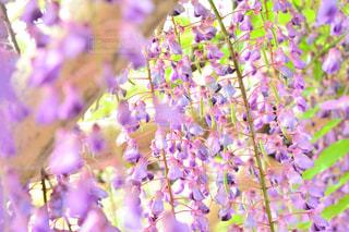 近くの花のアップの写真・画像素材[1153771]