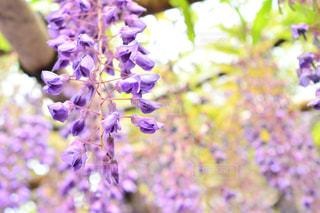 近くの花のアップの写真・画像素材[1153773]