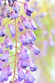 近くの花のアップの写真・画像素材[1153781]