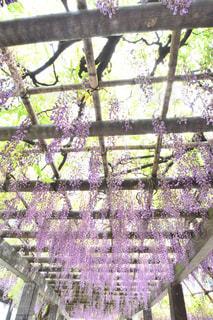 木製フェンスの上に紫の花の写真・画像素材[1153783]