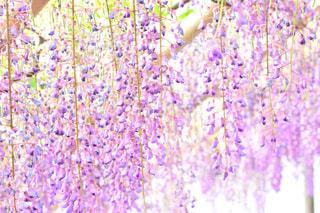 近くの花のアップの写真・画像素材[1153785]