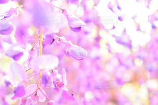 近くの花のアップの写真・画像素材[1153786]