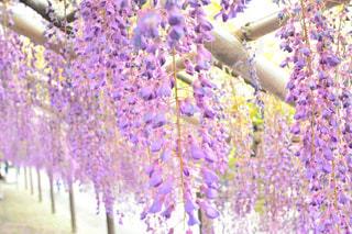 近くの花のアップの写真・画像素材[1153791]