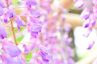 近くの花のアップの写真・画像素材[1153793]