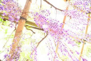 近くの花のアップの写真・画像素材[1153794]