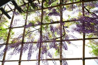 ウィンドウの横にあるツリーの写真・画像素材[1153795]