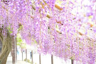 近くの花のアップの写真・画像素材[1153796]
