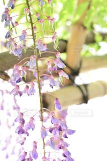 近くの花のアップの写真・画像素材[1153799]