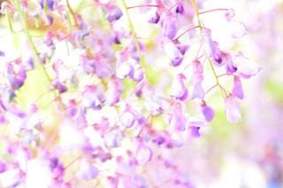 近くの花のアップの写真・画像素材[1153800]