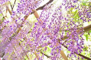 近くの植物に紫の花のアップの写真・画像素材[1153801]