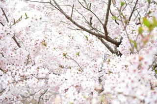茂みや木のグループの写真・画像素材[1153811]