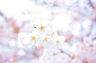 近くの花のアップの写真・画像素材[1153814]