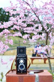 近くの花のアップの写真・画像素材[1153817]