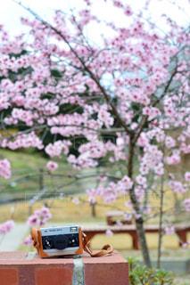 近くの花のアップの写真・画像素材[1153824]