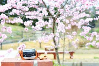 近くの花のアップの写真・画像素材[1153825]