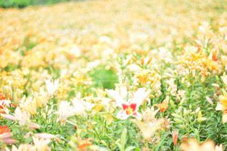 近くの花のアップの写真・画像素材[1153849]