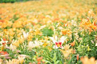 近くの花のアップの写真・画像素材[1153850]