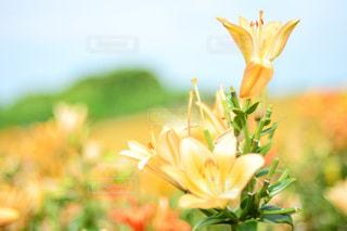 テーブルの上の花の花瓶の写真・画像素材[1153851]