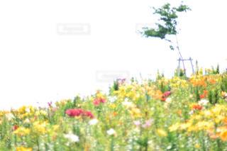 近くの花のアップの写真・画像素材[1153857]