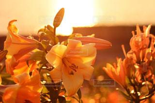 テーブルの上の花の花瓶の写真・画像素材[1153860]