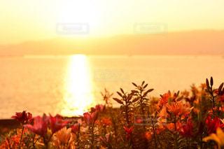 花の花瓶は、日没の前に座っています。の写真・画像素材[1153867]
