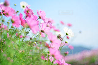 植物にピンクの花の写真・画像素材[1153940]