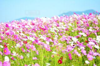 近くの花のアップの写真・画像素材[1153946]