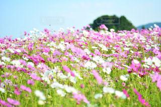 近くの花のアップの写真・画像素材[1153947]