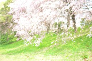近くに緑のフィールドのの写真・画像素材[1153959]