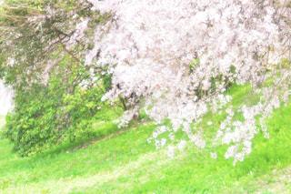 近くに緑のフィールドのの写真・画像素材[1153963]
