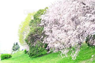 背景の木と大規模なグリーン フィールドの写真・画像素材[1153969]